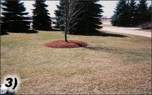 Lawn Care Edging Process | Landscape Management Services | Waukesha, Oconomowoc, Delafield, Brookfield, Menomonee Falls, Pewaukee, Wisconsin